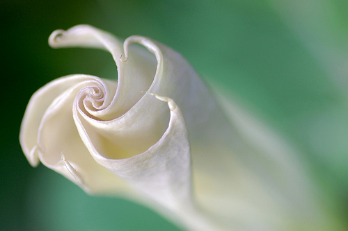 unfolding flower